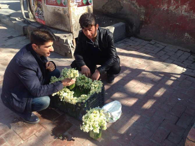 Baharın habercisi nergiz çiçeği satışa sunuldu