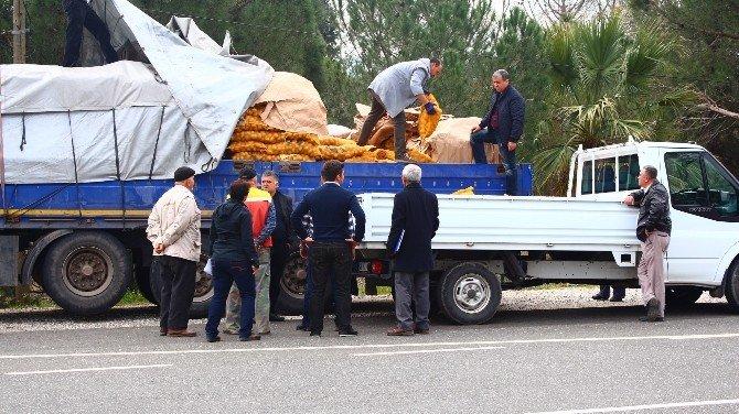 Büyükşehir, Üreticilere 130 Ton Patates Tohumu Dağıttı