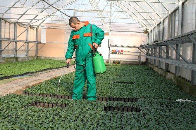 Engelli Öğrencilerin Yetiştirdiği Bitkiler Denizli'yi Süslüyor