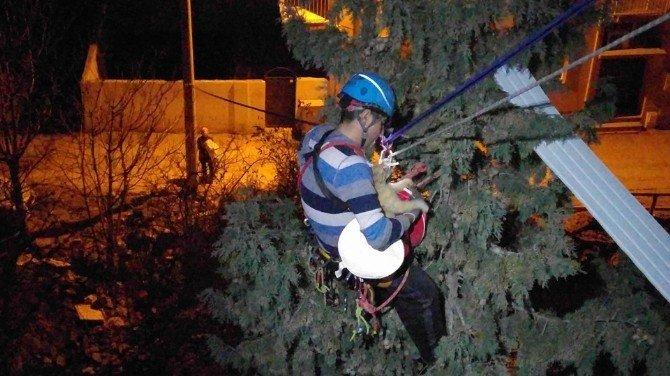 3 Gün Ağaçta Mahsur Kalan Kedi Operasyonla İndirildi