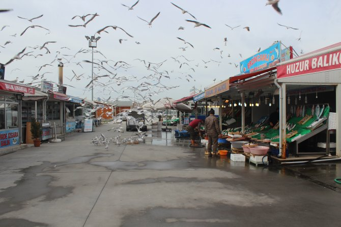 Denizlerde balık az, tezgahlarda fiyatlar fazla