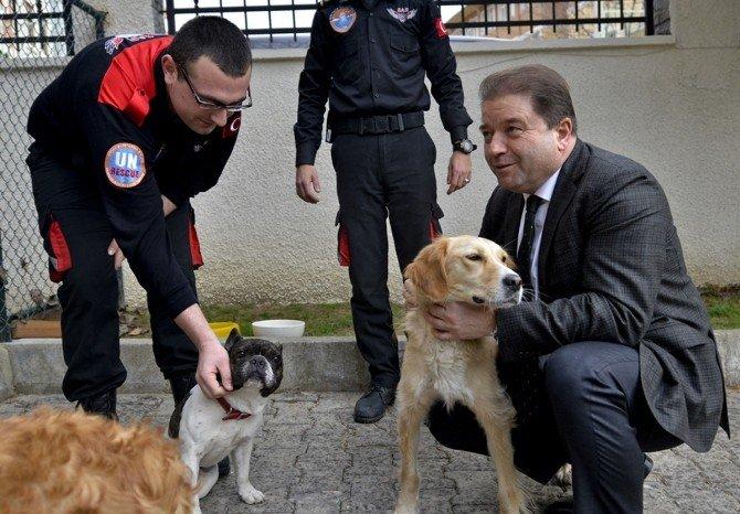 Maltepe'de Sokak Köpekleri Eğitilerek, Arama Kurtarma Çalışmalarında Görevlendiriliyor