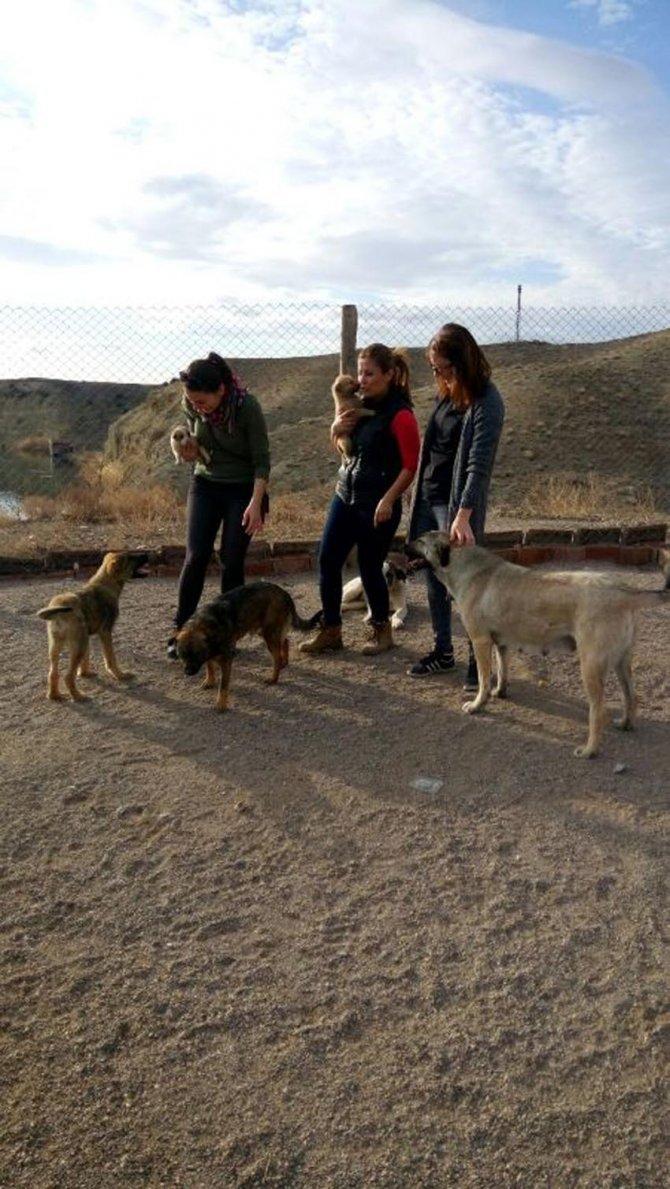 Hayvan hakları aktivistleri barınakları gezdi