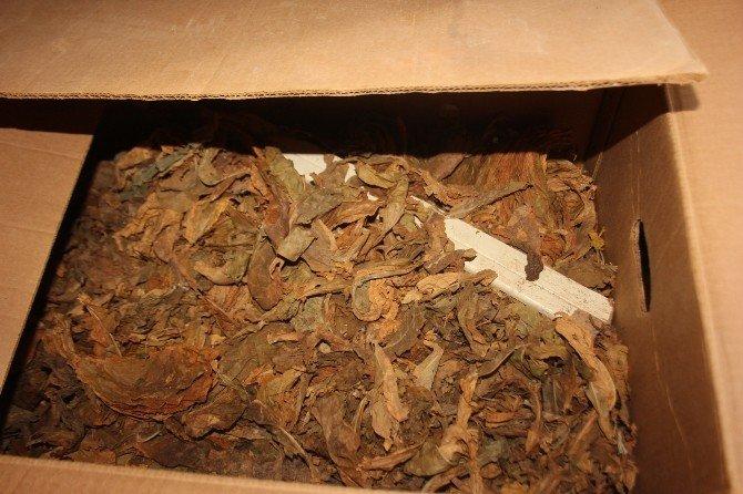 Bafra'da Tütün Hırsızlığı