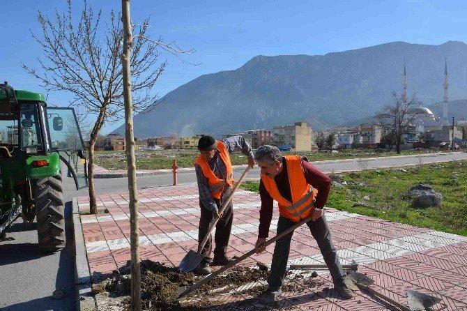 Şehzadeler Belediyesi'nden Ağaçlandırma Seferberliği