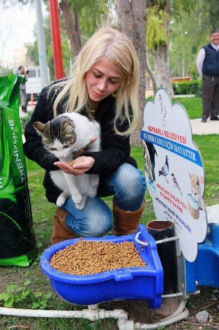 Bayraklı'da Sokak Hayvanlarına Özel İlgi