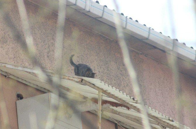 Mahsur Kalan Kedi 5. Kattan Aşağı Düştü