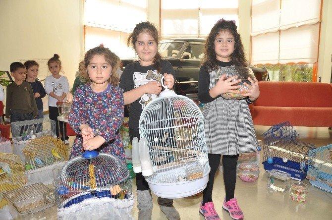 Öğrenciler Okulu Hayvanat Bahçesine Çevirdi