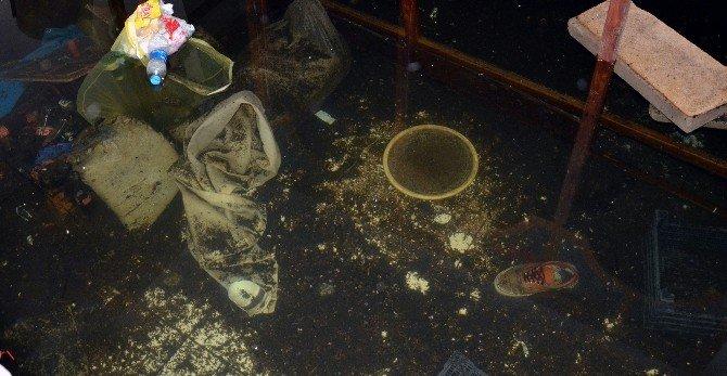Alanya'da Bodrum Katlara Sinek Uyarısı