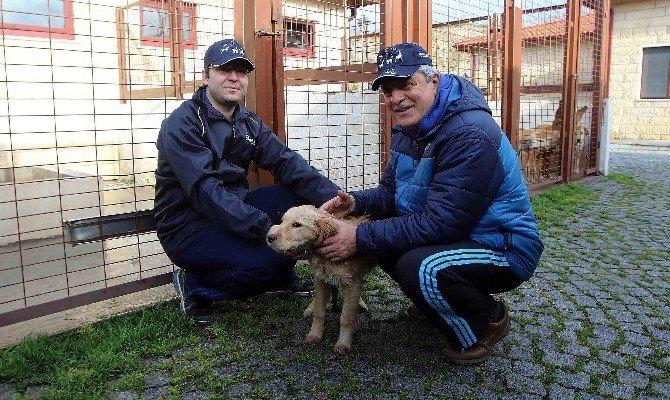 Bir Yılda 4 Bin 525 Sokak Köpeği Tedavi Edildi
