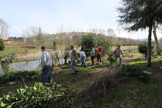 Serdivan'da Bitki Bakım Ve Budama Çalışmaları Devam Ediyor