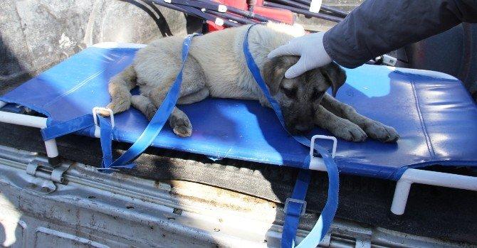 Yaralı Yavru Köpek İçin Ekipler Seferber Oldu