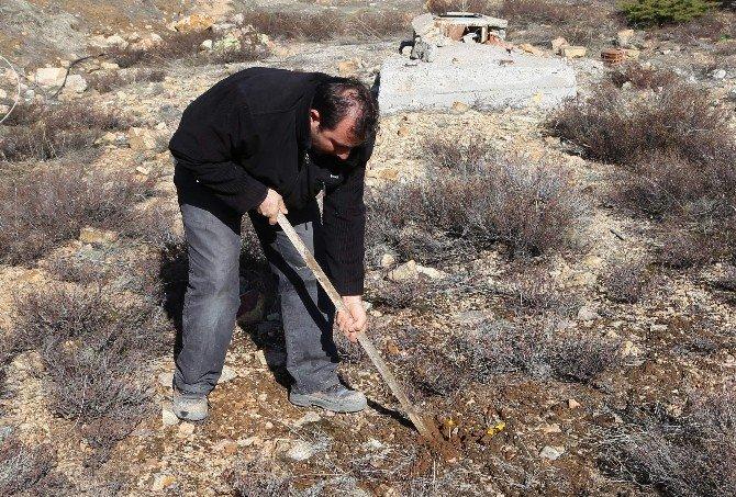 Yozgat'ta Baharın Müjdecisi Çiğdemler Çıktı