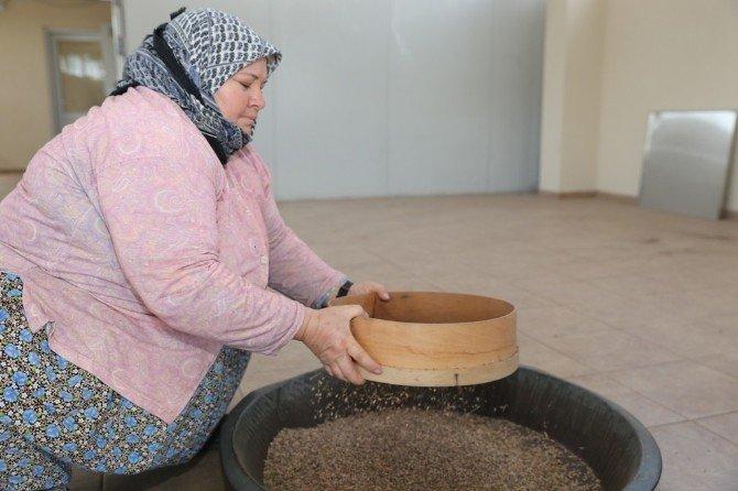 Türkiye'nin Fidan Ve Tohumları Manisa'dan