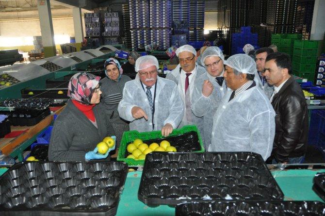 Arap ülkeleri elmada rotayı Türkiye'ye çevirdi