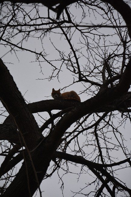 Üç Gündür Beklediği Ağaçtan İtfaiye Ekiplerini Görünce İndi