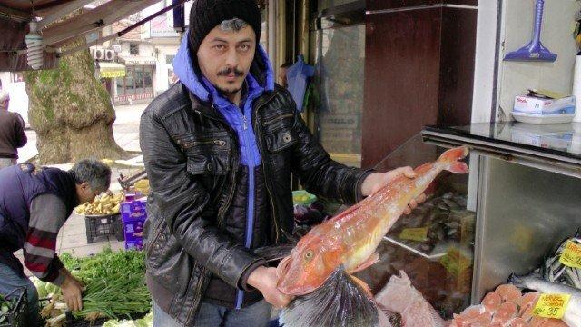 Karadeniz'de Kırlangıç Balığı