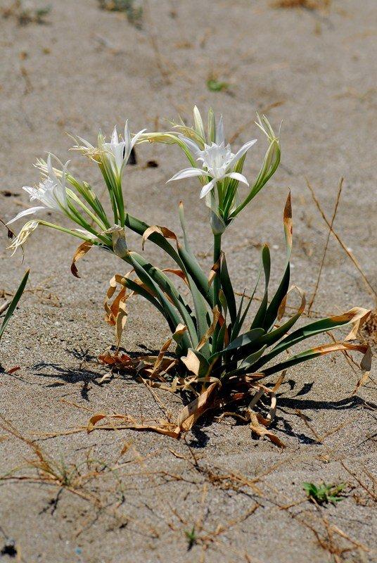 Kızılırmak deltasının kuşları gibi bitkileri de korunacak