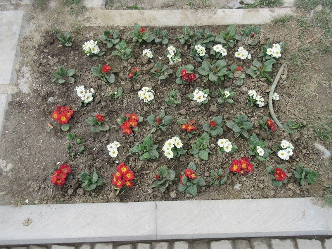 Kula Çiçek Bahçesine Döndü
