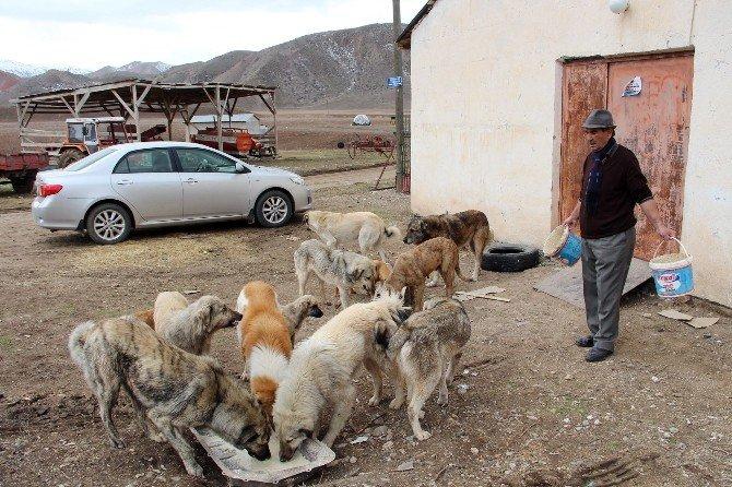 12 Yıldır Sokak Köpeklerine Bakıyor