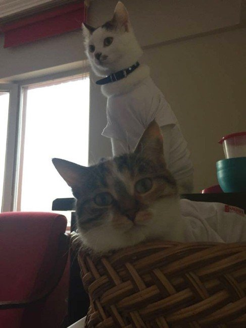 """""""Kedi Sahipleri Mart Ayına Dikkat Etmeli"""""""