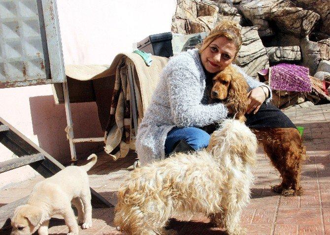 Bu Proje Sokak Hayvanlarına Can Simidi Olacak