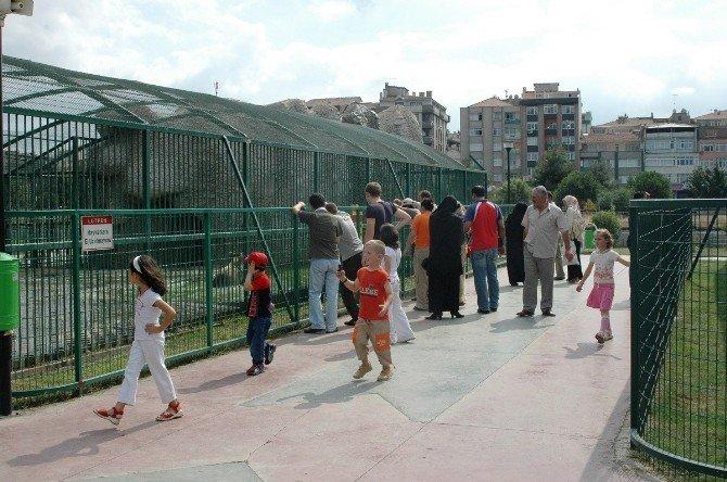 Hayvanat Bahçesi Bayrak Tepe'ye Taşınacak