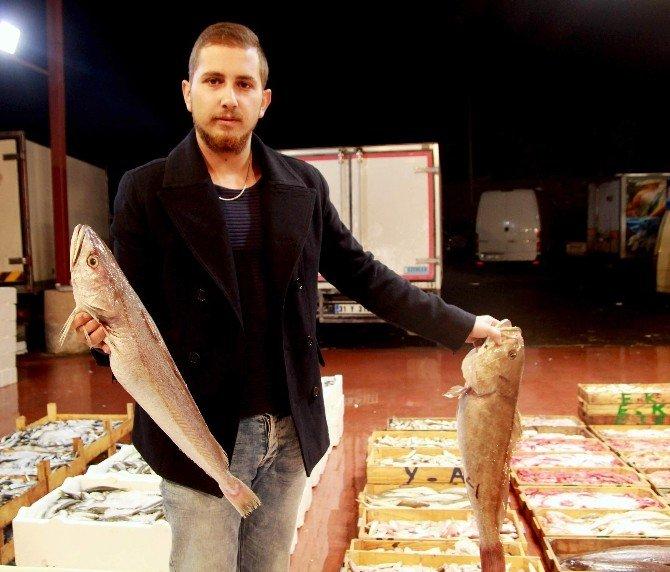 Soğuk Ve Fırtına Balık Fiyatlarına Tavan Yaptırdı