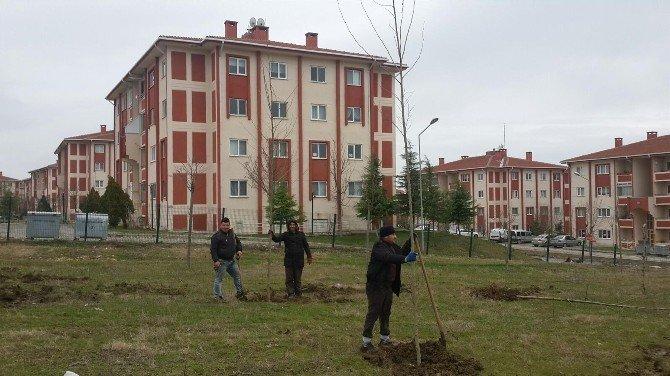 Edirne Belediyesi'nin Fidan Ekimleri Devam Ediyor