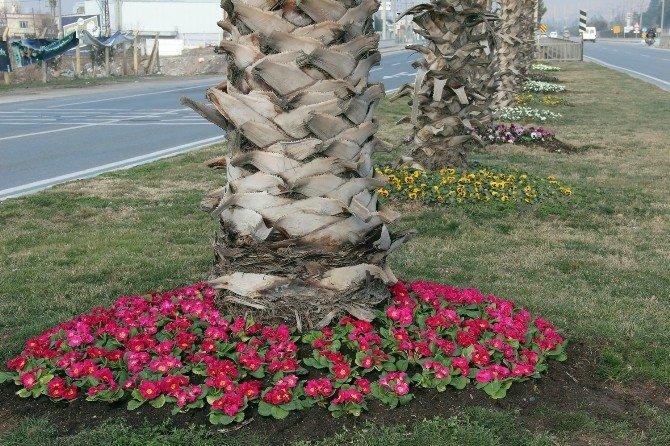 Kahramanmaraş Rengarek Çiçeklerle Süslendi