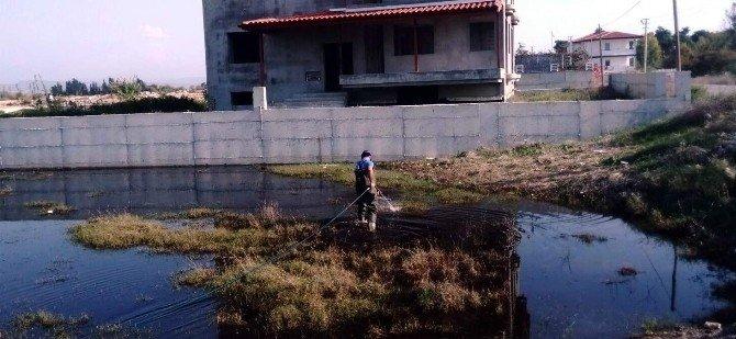 Manavgat'ta Sineklere Geçit Yok