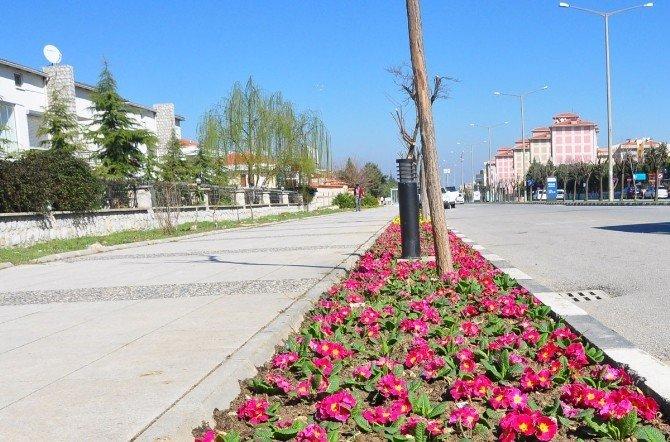 Ingolstadt Bulvarı Çiçeklerle Süslendi
