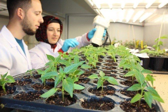 Niğde Üniversitesi İnsana Ve Doğaya Zarar Vermeyen Tarım İlacı Üretti