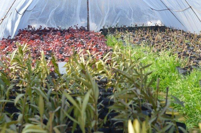 Diyarbakır'da Bahar Ayında 30 Bin Ağaç Ve 16 Bin Çiçek Dikilecek