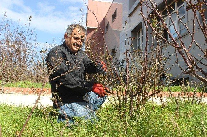 Aydın'da Bağ Ve Bahçelerde İmar Sezonu Erken Başladı