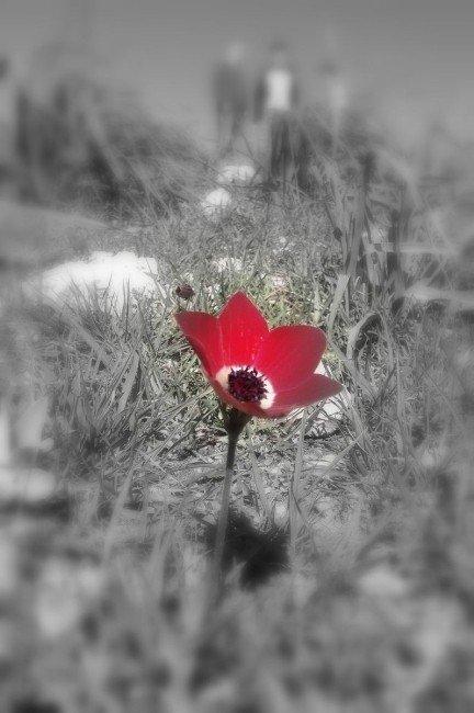 Cemre Düştü, Kır Çiçekleri Açtı