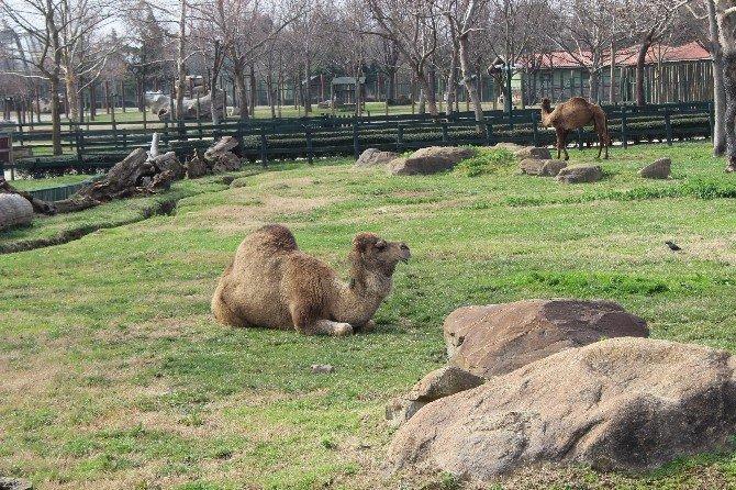 Hayvanlar Kış Ortasında Güneşin Tadını Çıkardı