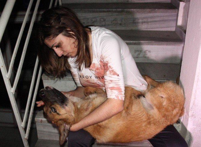 Otomobilin Çarptığı Köpeği Kucağına Alıp 'Ne Olur Ölme' Diye Ağladı