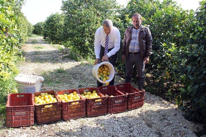 Mersin'den Cerattepe'ye Limon Seferberliği
