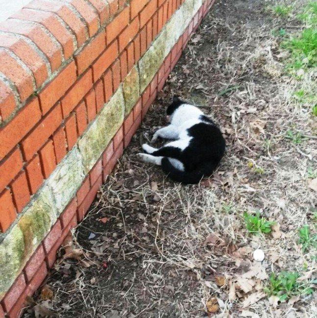 Çanakkale'de Kedi Katliamı