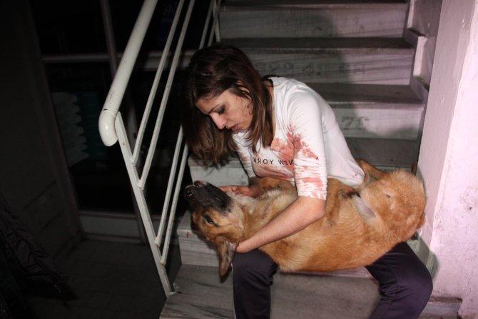 Arabanın çarptığı köpeğe 'Ne olur ölme' diyerek gözyaşı döktü