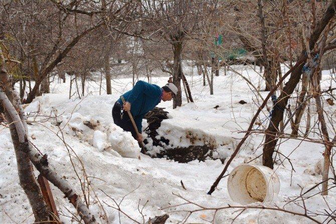 Kar Altında Kışlık Yiyecek Bulma Telaşı