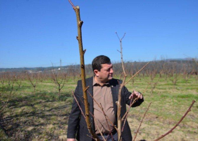 Bursa Eksi 17 Dereceyi Gördü, Zeytin Ve Meyve Ağaçları Yandı