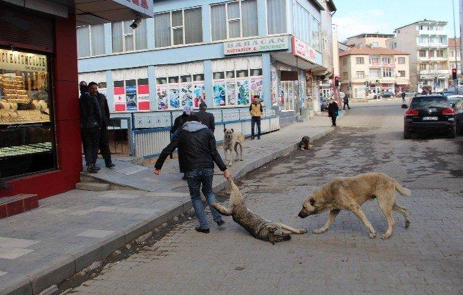 Köpeklere İşkenceye Valilik Soruşturması