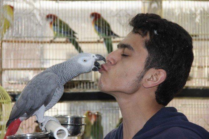 Papağanlarını Otomobil Ve Motosikletle Takas Ediyor