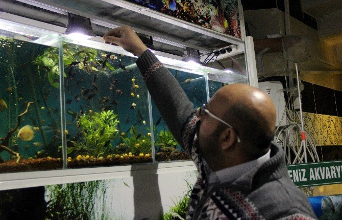 Süs Balıklarına Talep Patlaması