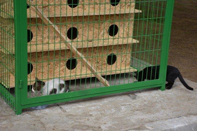 Bu İlçede Sokak Hayvanları Koruma Altında