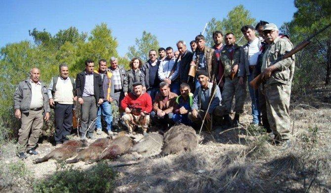 Mut'ta Yaban Domuzlarına Sürek Avı