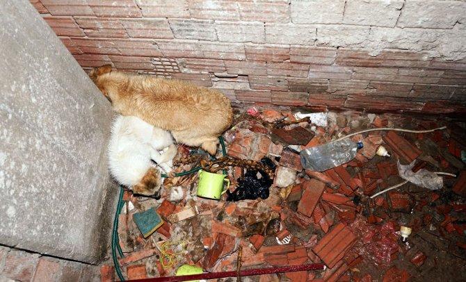 Havalandırma boşluğuna düşen köpekleri itfaiye kurtardı