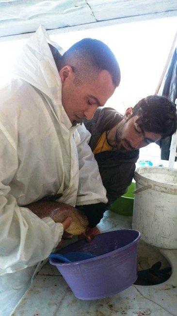 Van'da Su Ürünleri Tesisleri Denetlendi